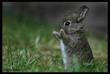 Bunny Luv / by Terri Beasley