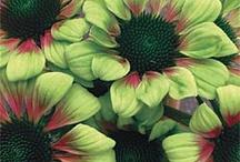 Flowers / by marasdesigns