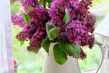 Bouquet de Fleurs / by Susan DeLucca