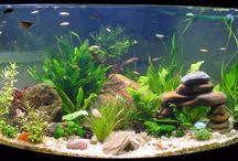 Fish Tank Ideas / by Vicky Porter