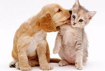 Dogs & OTHER CUTE CREATURES... / Animals / by zen Macias