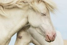 Horse love / by Sandy W