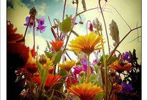 Flowers / by Linda Elliott