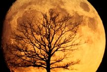 Moon! / by Cynthia Sass