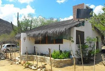 Cabo Pulmo considered as a cultural  / Cabo Pulmo, juast at 40 minutes from Los Cabos, is know considered a cultural patrimony by the UNESCO. / by Visit Baja California Sur