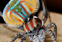 Creepy crawlers and flyers / by Jeannelle Thomas