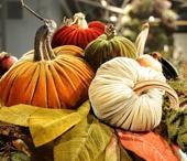 Fall Harvest / by Kimberly Martin