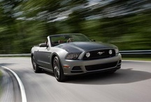 2013 Ford Mustangs / 2013 Ford Mustangs / by StangBangers