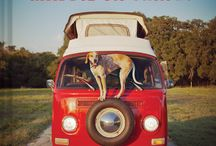 Aren't Dogs Amazing? / by Greyhound Greetings