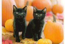 Halloween / by Sherry Archibald