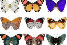 Butterflies / by Jessica Puakalehua Johnson