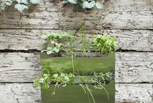 Gardening  / by Michelle Harrell