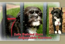 safe behind bars harness for dogs / by Maureen Brown