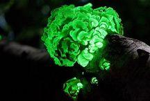 nature is cool / by Brenda Wesley