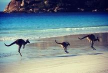 Been there Australia / Places l've visited in Australia  / by Lynne Wise