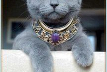 Glamorous Pets / Glamorous pets, classy cats, and pretty puppies! / by Jessica M