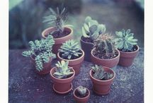 Succulents:) / by Kirsten Knight