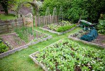 Gardens / by Pamela Hansen