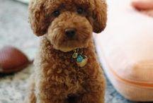 Poodle cuts / by Kathy Carroll Karpowicz