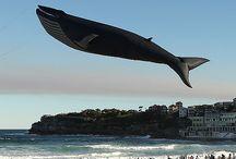 kites / by Susan Woody Farley