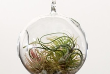 Just Terrariums / Every home should have some green. These are tidy, economical, low care alternatives. / by Kim Jaspers