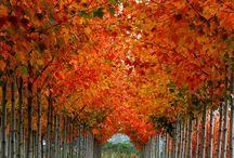 autumn / by Candi Weinrick