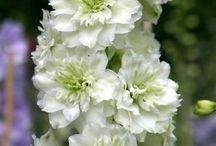 Flores. / by Ma Virginia Cuartas R