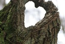 Hearts In Nature / Hearts in Nature / by Barbara Barreau