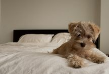 Kip's Post / My terrier Kip and other furry friends / by Astrid
