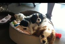 My pups / by Laura Hooper