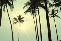 Pineapples & Palms / The two essential indicators of a perfect island escape / by Tommy Bahama