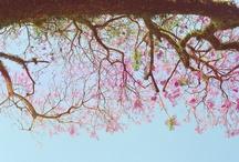 minhas fotos :) / by Camila Soares