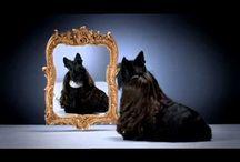 Scottie Dog Videos / by Karen Grant