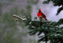 Birds / by Cindy Merchant