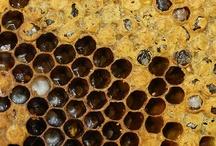 Bee / by usagi nomedama