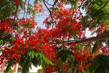 Kanarische Inseln  / by urlaubsreiseblog