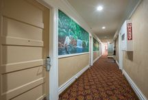 Adante Hotel in San Francisco / Adante Hotel offers comfortable lodging, friendly & courteous staff, and a great location. Sitting in the heart of San Francisco's Union Square in downtown. / by Adante Hotel San Francisco