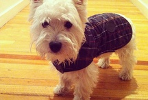 Barbour Dogs / by Barbour