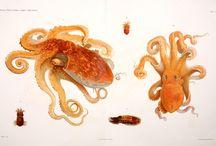 Scientific Illustration / by Ireland