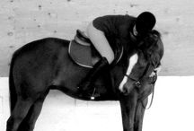 All About Horses / by Leticia Jerguson