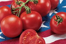 4th of July Garndening / Stars and stripes for your garden and plate!  / by Burpee Gardens