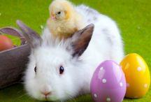 Easter / by Jennifer Holm