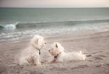 Westies / by Claire Sylvestre