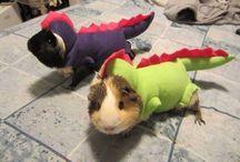Pets! / by Amelia Jeanne