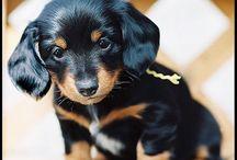 So cute! / by Megan Barrass
