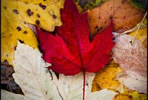 Fall / by Suzanne Jolly