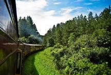 Train to Ella, Sri Lanka / by Secret Lanka