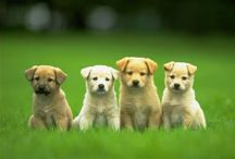 PUPPIES / by Alex Ordway