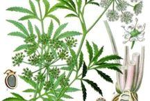 toxic plants / by Wildcraft Vita