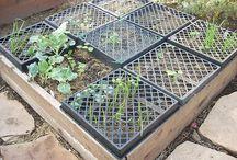 GARDEN pest solutions / by Sandra Cassel